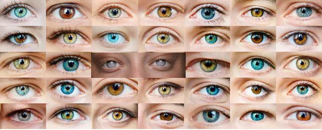 Ipovedenti ciechi che vedono